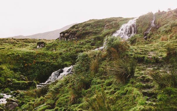Фото обои grass, sunshine, water, bushes, hill, plants, stream