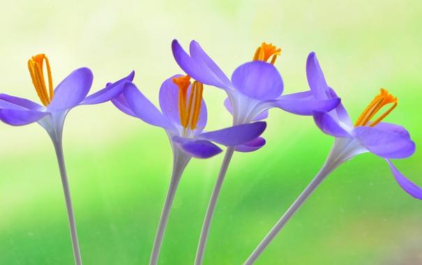 Фото обои цветы, стебли, лепестки