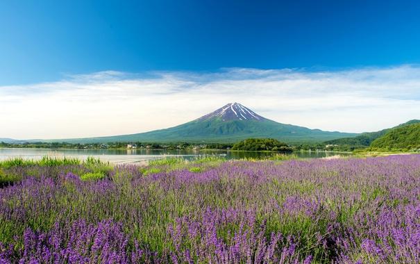 Фото обои озеро, гора, луг, лаванда, Фудзияма