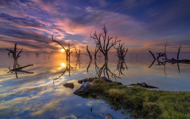 Фото обои озеро, деревья, закат