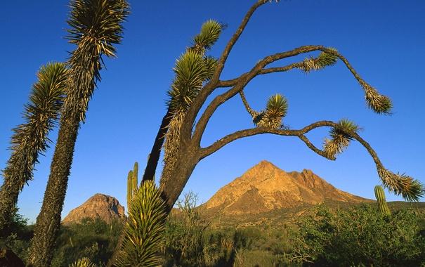 Фото обои небо, пейзаж, дерево, гора, кактус