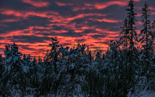 Фото обои зима, небо, снег, деревья, закат