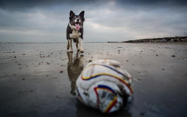 Фото обои взгляд, друг, мяч, собака
