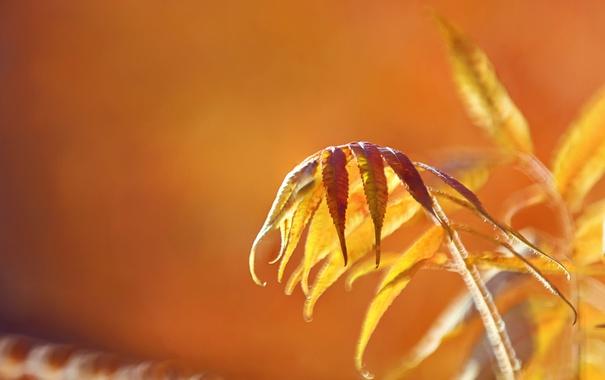 Фото обои осень, листья, природа, фон