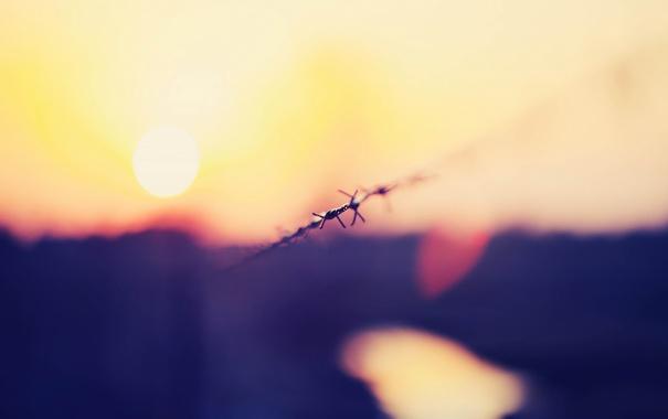 Фото обои Солнце, Небо, Проволока