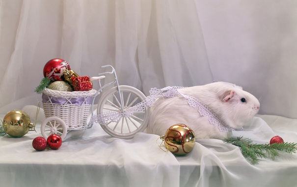 Фото обои игрушки, Новый год, повозка, белая, морская свинка