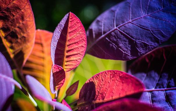 Фото обои цвет, растение, макро, листья, осень