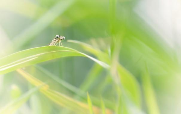 Фото обои насекомые, природа, фон