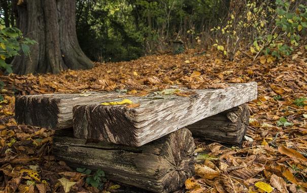 Фото обои осень, листья, скамья