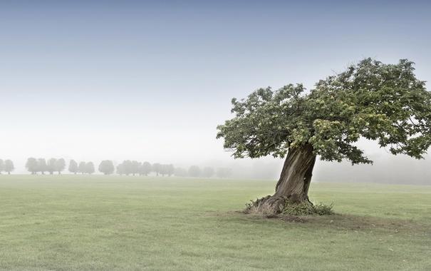 Фото обои туман, поле, дерево