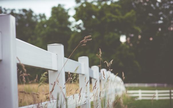 Фото обои trees, fence, rainy