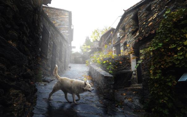 Фото обои город, улица, собака