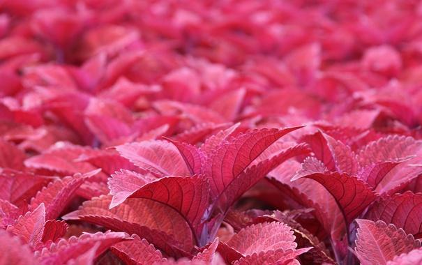 Фото обои листья, розовые, много