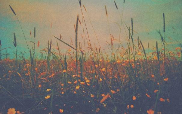 Фото обои небо, облака, цветы, стебли, куст