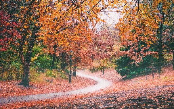 Фото обои деревья, парк, осень