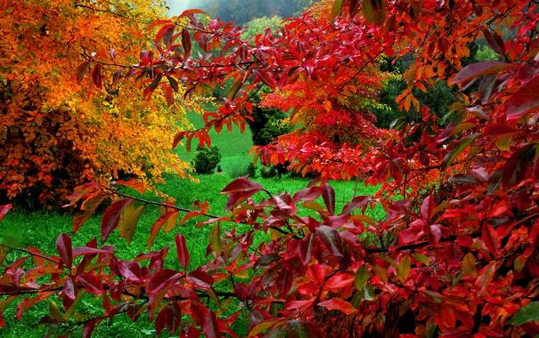 Фото обои осень, трава, листья, краски, багрянец