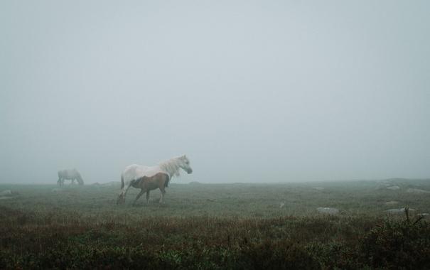 Фото обои поле, туман, лошадь, щенок, кобыла