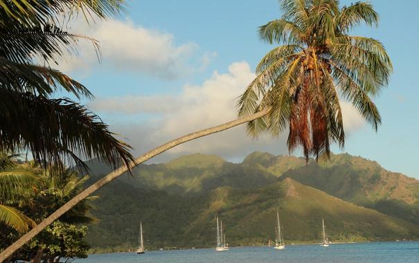 Фото обои море, горы, тропики, пальмы, побережье, яхты, Французская Полинезия