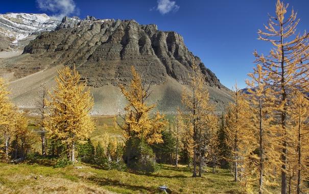 Фото обои осень, деревья, горы, Канада, Альберта, temple mountain