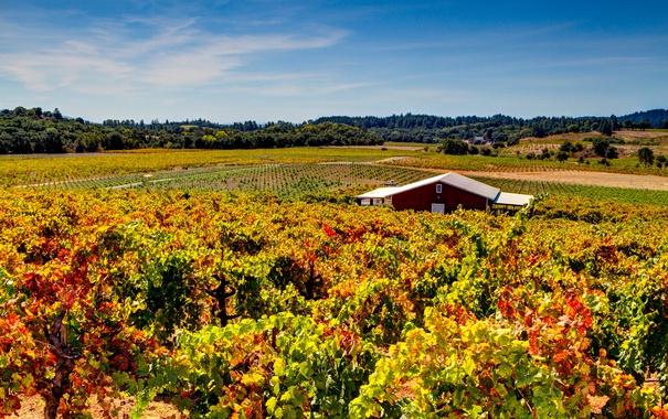 Фото обои поля, плантации, Sonoma County, деревья, домик, Dry Creek Vineyard, солнце