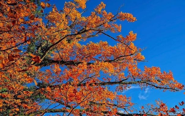 Фото обои осень, небо, листья, ветки