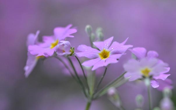 Фото обои макро, природа, лепестки, стебель, соцветие