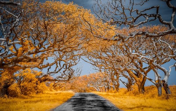 Фото обои цвет, дорога, деревья, природа