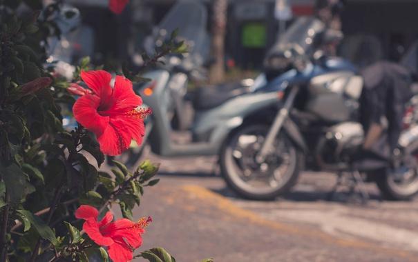 Фото обои цветок, красный, лепестки