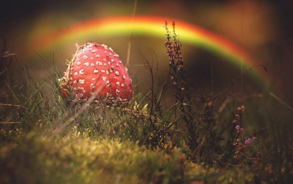 Фото обои осень, гриб, природа