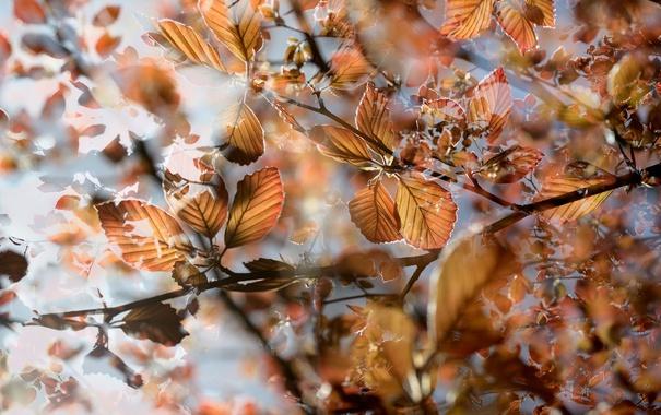 Фото обои листья, ветки, природа