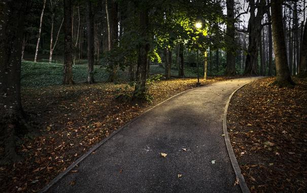 Фото обои дорожка, осень, парк