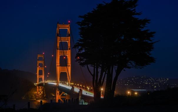 Фото обои мост, Сан-Франциско, Golden Gate Bridge, Золотые Ворота, California, дерево, огни