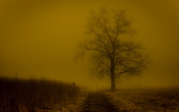 Фото обои вечер, дерево, туман, поле, иней