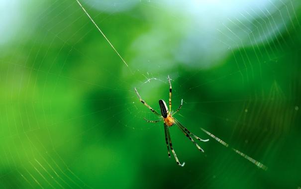 Фото обои макро, природа, паутина, паук, насекомое