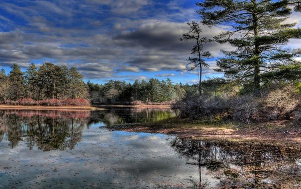 Фото обои небо, деревья, озеро