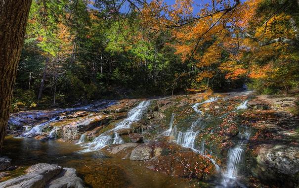 Фото обои осень, лес, природа, река, фото