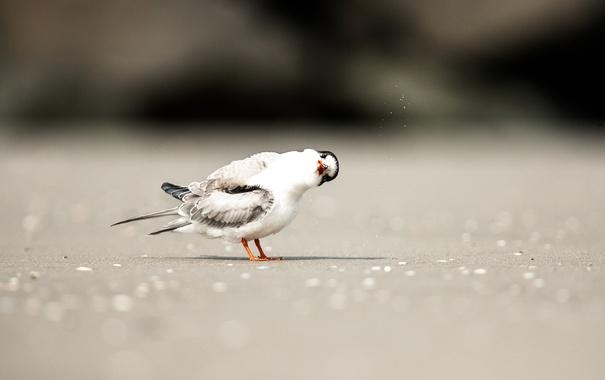 Фото обои боке, птица, тень, любопытство, пляж, песок