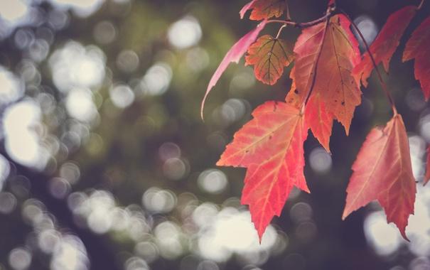 Фото обои листья, красные, боке