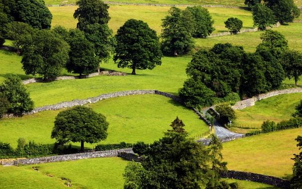 Фото обои дорога, трава, деревья, поля, Великобритания, вид сверху, участки