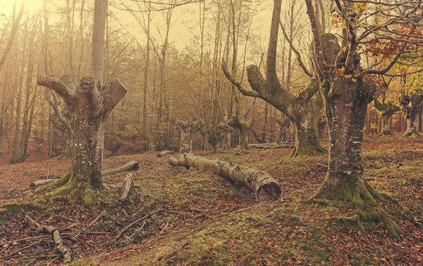 Фото обои sunshine, forest, trees, leaves, branches, moss
