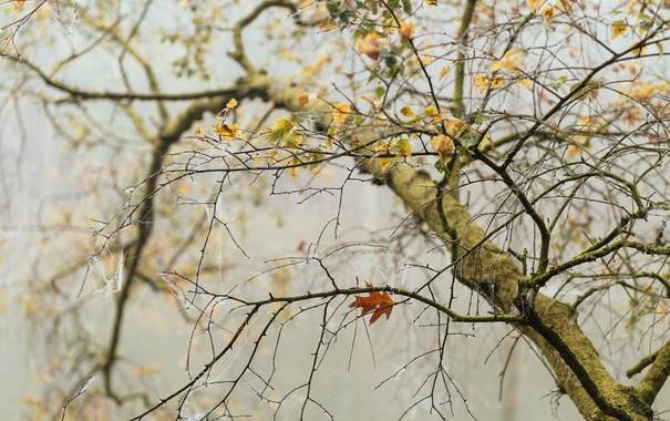 Фото обои дерево, осень, паутина, листья