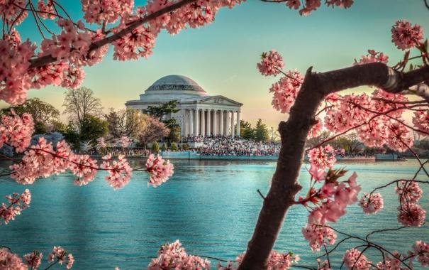 Фото обои landscape, весна, вишня, water, monument, sunset, tree