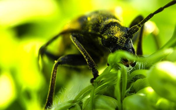 Фото обои макро, насекомые, природа