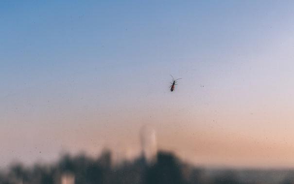 Фото обои капли, окна, жук, Нью-Йорк, боке, стекла, Соединенные Штаты