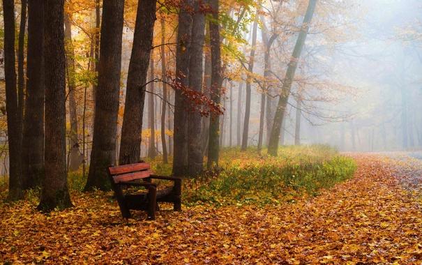 Фото обои скамья, парк, осень