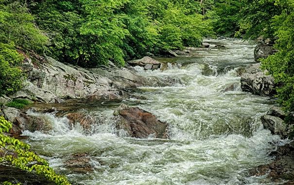 Фото обои зелень, вода, река, камни, заросли, поток, речка