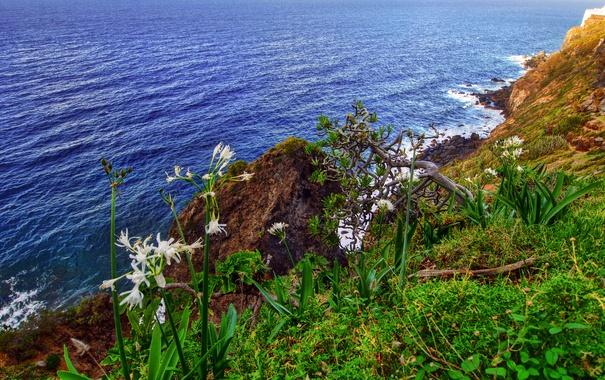 Фото обои море, небо, трава, цветы, скалы