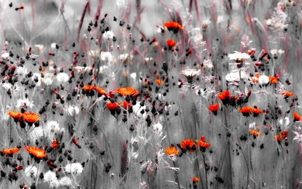 Фото обои лето, цветы, природа