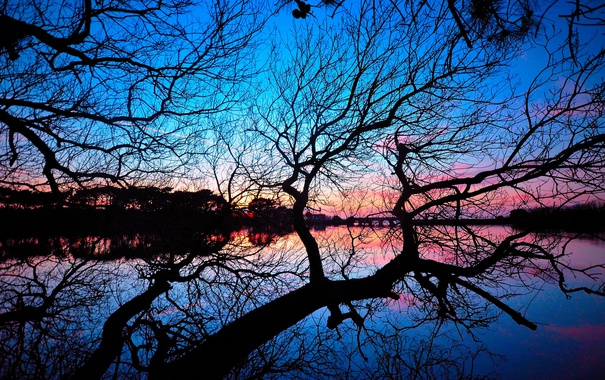 Фото обои небо, мост, озеро, дерево, ветви, зеркало, силуэт