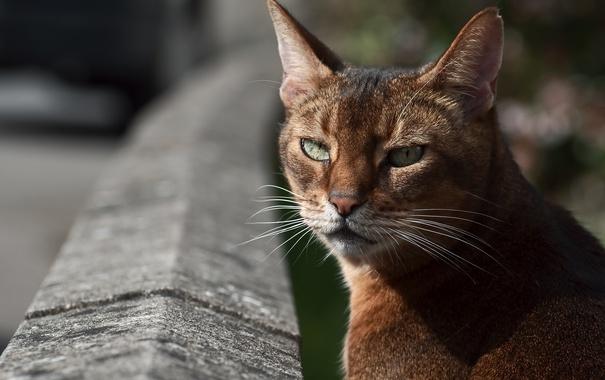 Фото обои глаза, кот, усы, котэ